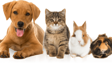 Dog Insurance - Be Your Dog's Best Friend by Preparing in Advance