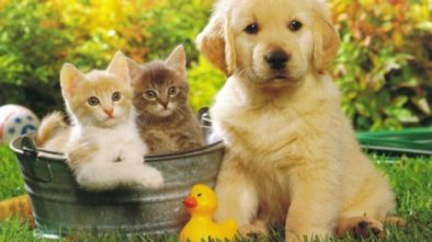 Dog Pet Insurance - Veterinary Science Has Come a Long Way Baby!