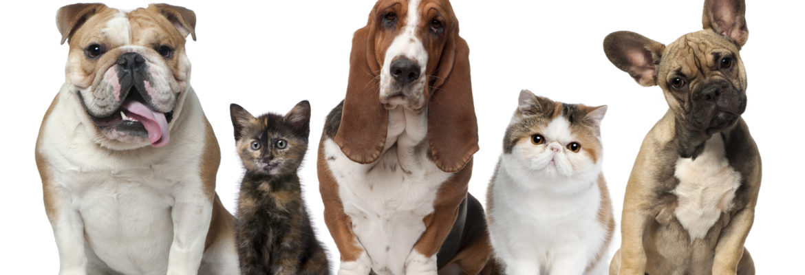 Finding Cheap Pet Insurance - Is There Such a Thing?