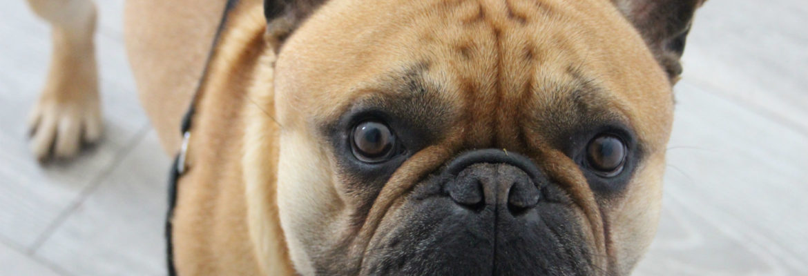 Finding the Cheapest Pet Insurance Can Be Daunting to Say the Least