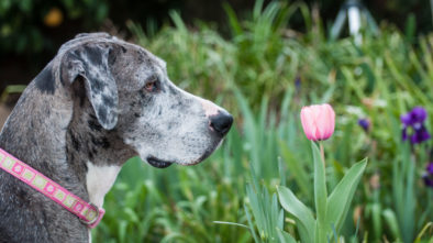 How Do Dog Breeds Insurance Rates Differ?